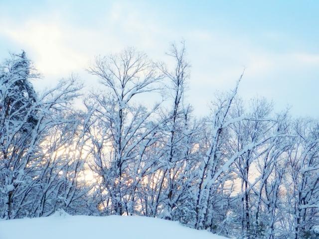 雪景色 スノーサーチ